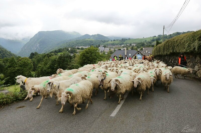 Transhumance route_A99A4391