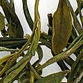 Assortiment de thé sur toobeautyfood: le thé vert de chine