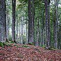 Terrains de chasse (1)