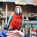Amneville zoo 12
