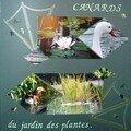 Canards du jardin des plantes