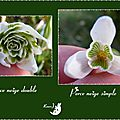 Coeur de la perce neige simple et double