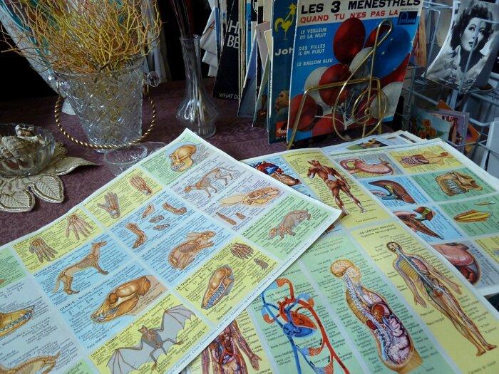 47 Planches anatomie