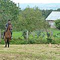 Jeux équestres manchots - parcours de pleine nature après-midi (30)