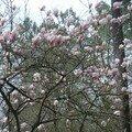 magnolia 254
