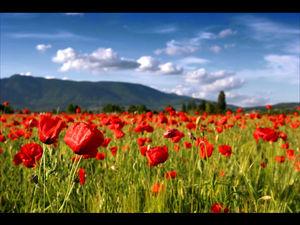 519_champ_de_fleurs_WallFizz