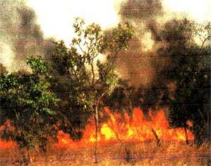 feu de brousse