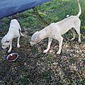 2 chiens sur Sainte Anne 3