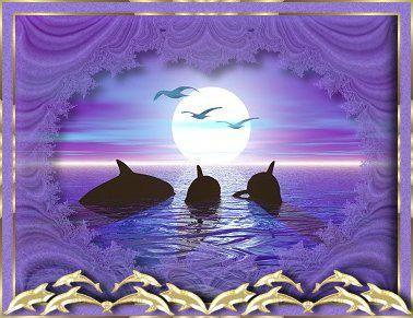 dauphins06