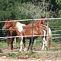 Quelques poneys