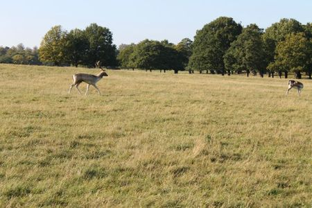 richmond park (34)