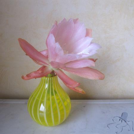 grosse_fleur_rose_dans_vase_citron