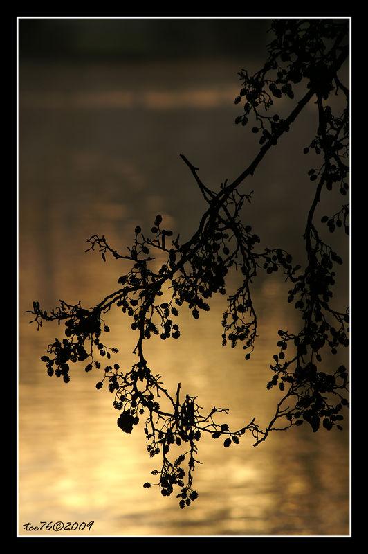 PICT5994_20