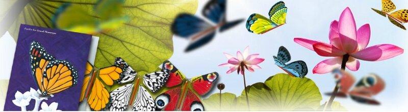 papillonmagique