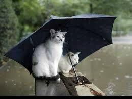 Printemps - pluie
