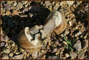 2011 08 canalblog 367460805_q