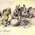 des lapins?