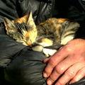 Sisha ( ou 6a+ ? ), le chat du café Rueda