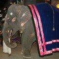 éléphant lors d'un défilé religieux