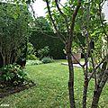 Tailler un arbuste selon la méthode de transparence