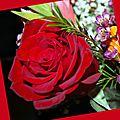Lire les roses