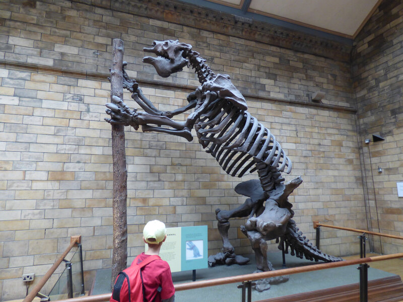 25 Londres Natural History Museum (19)