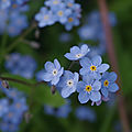 12-fleurs