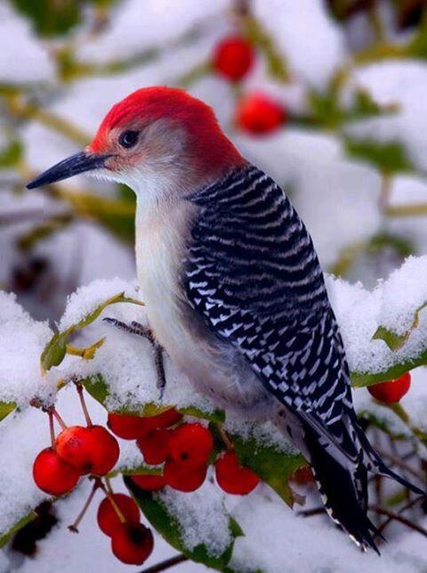 oiseau-dans-la-neige