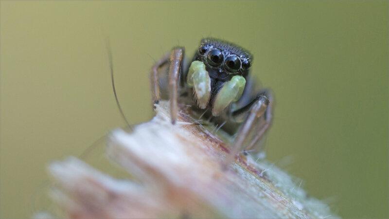 SM mur 280319 ym 19 araign saltique reflets yeux