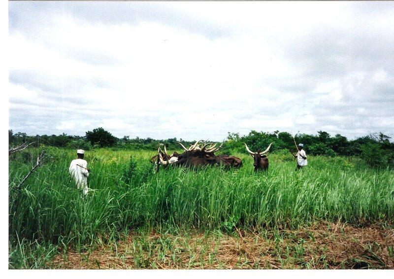 Une évaluation à mi-parcours sans complaisance du Projet National de Développement de l'Elevage de Centrafrique 1990