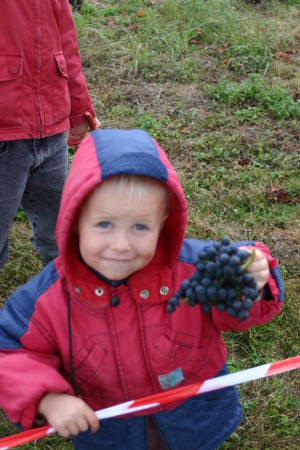 les_vendanges___la_chapelle_5_octobre_2008_018