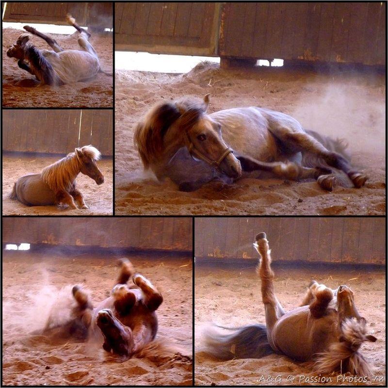 un cheval heureux