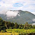 Le Pic Soulaing et le bois Souriguères depuis Barlagne...