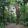 Forêt amazonienne - Sentier de la Montagne des Singes
