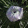 Biscornu couleur lavande