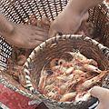 pour quelques reales on peut acheter d excellentes crevettes