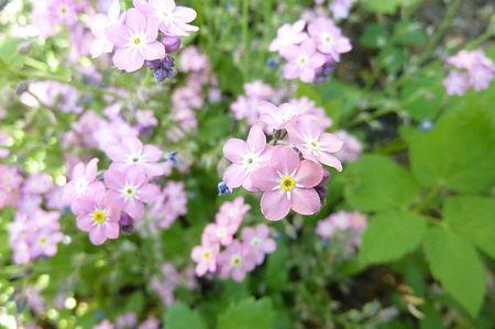 jardin mai 2013 (7)