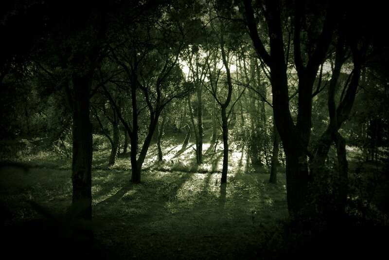 foret-sombre