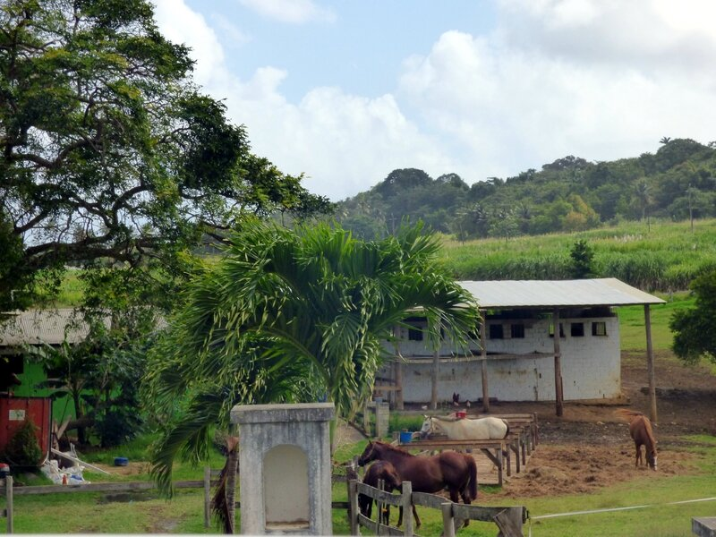 28 01 16 (La Barbade)022