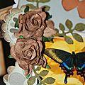 papillon9