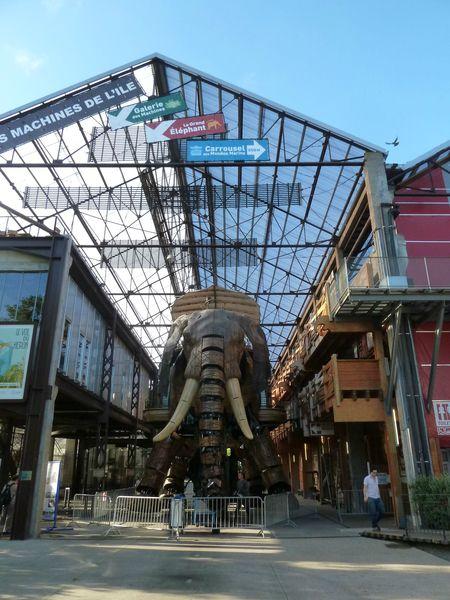 12 aout 2013-éléphant (4)