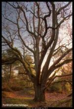 Visitez la forêt de Fontainebleau avec vos petits