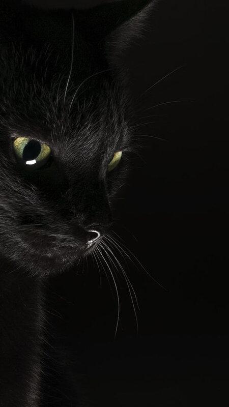 chat noir_3