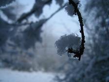 Branche neige OK 14