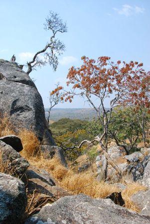Zambie (581)
