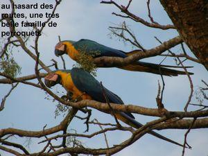 3_perroquets