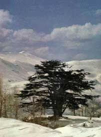 lebanon_nature15