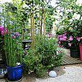 prêle en pot hydrangea paniculata hortensias roses penstémon pommier jonagold