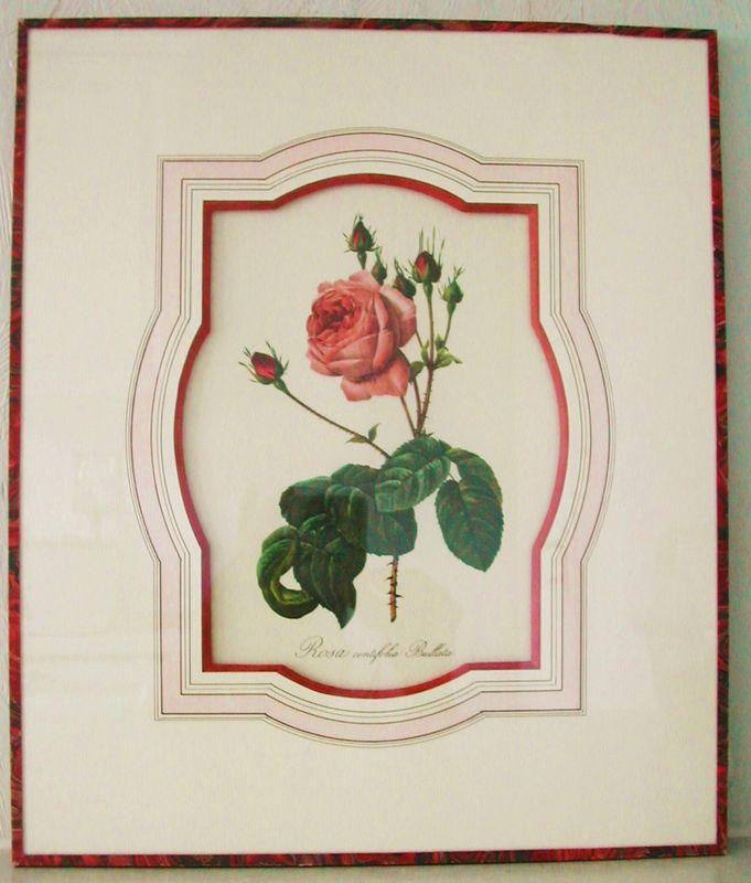 Rose fushia de Redouté