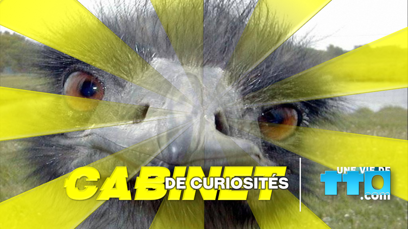 2019 - CABINET DE CURIOSITES